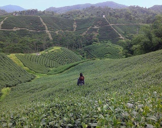 Kebun Teh Cikuya, via instagram